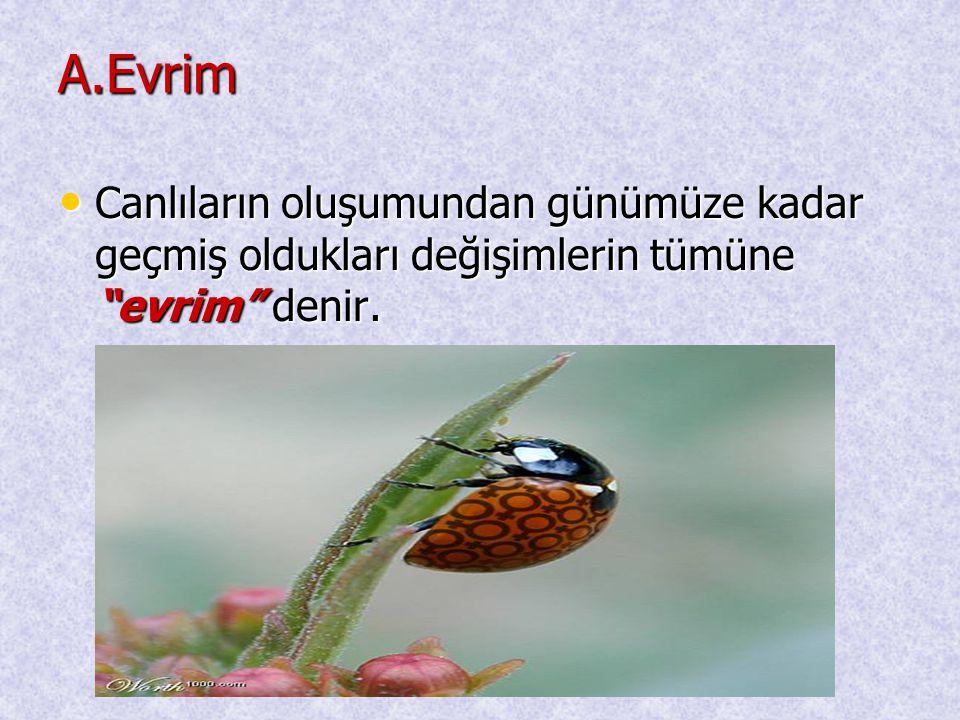 """A.Evrim • Canlıların oluşumundan günümüze kadar geçmiş oldukları değişimlerin tümüne """"evrim"""" denir."""