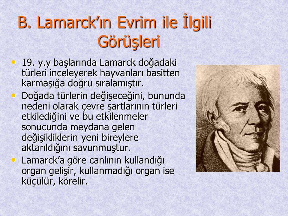 B. Lamarck'ın Evrim ile İlgili Görüşleri • 19. y.y başlarında Lamarck doğadaki türleri inceleyerek hayvanları basitten karmaşığa doğru sıralamıştır. •
