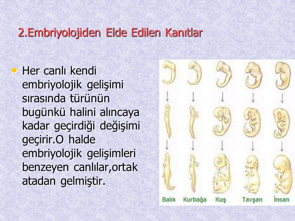 2.Embriyolojiden Elde Edilen Kanıtlar • Her canlı kendi embriyolojik gelişimi sırasında türünün bugünkü halini alıncaya kadar geçirdiği değişimi geçir