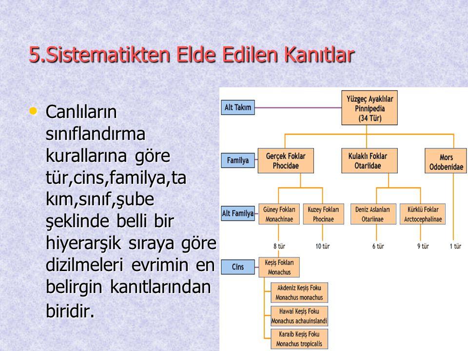 5.Sistematikten Elde Edilen Kanıtlar • Canlıların sınıflandırma kurallarına göre tür,cins,familya,ta kım,sınıf,şube şeklinde belli bir hiyerarşik sıra