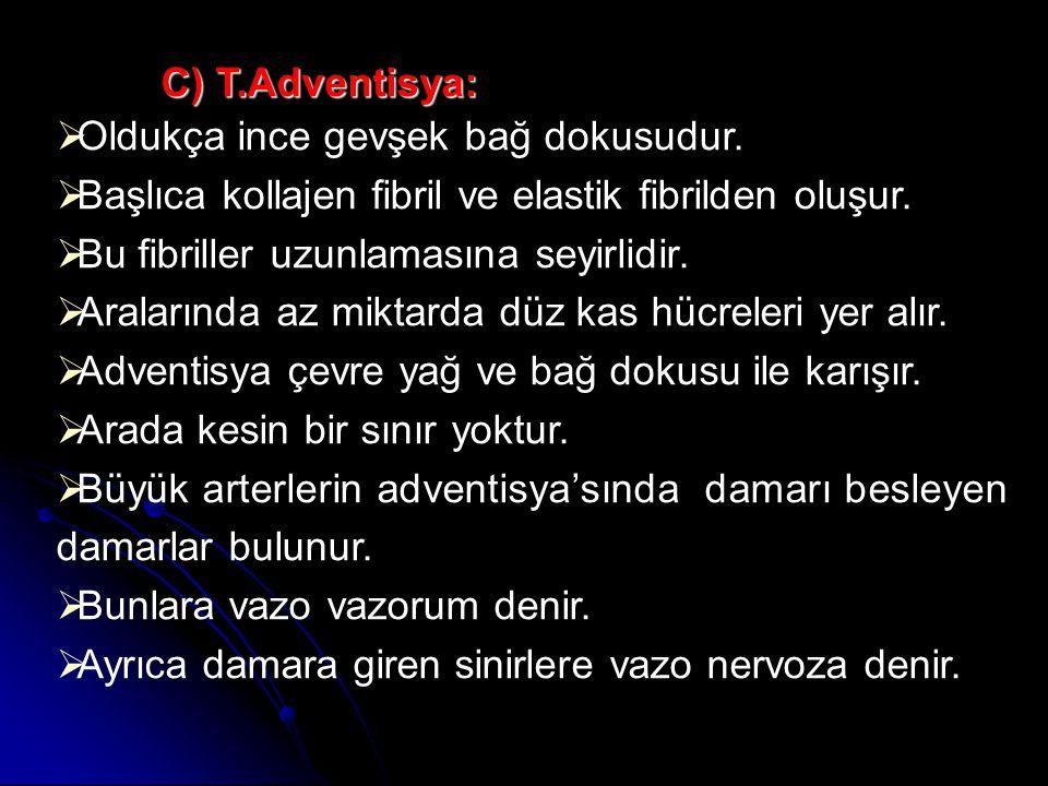 C) T.Adventisya:  Oldukça ince gevşek bağ dokusudur.
