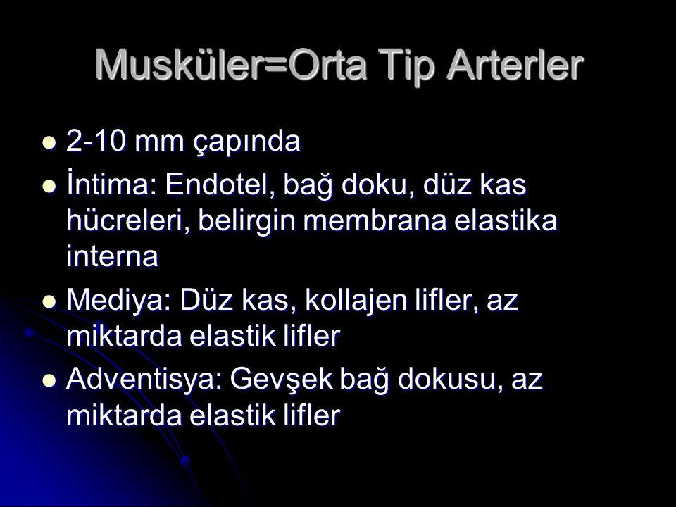 Membrana Elastika Eksterna: Membrana Elastika Eksterna:  Mediya ile adventisya arasında bulunan dış elastik membrandır.
