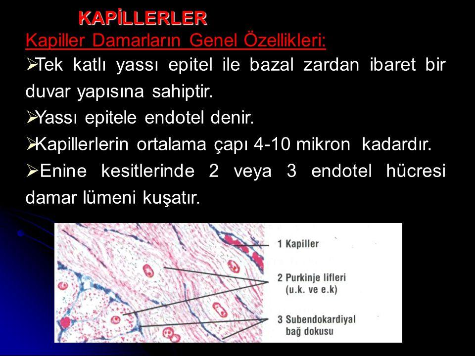  Endotel hücreleri arasında (zonula okludens) * tipi bağlantılar vardır ve bunun fizyolojik önemi vardır.