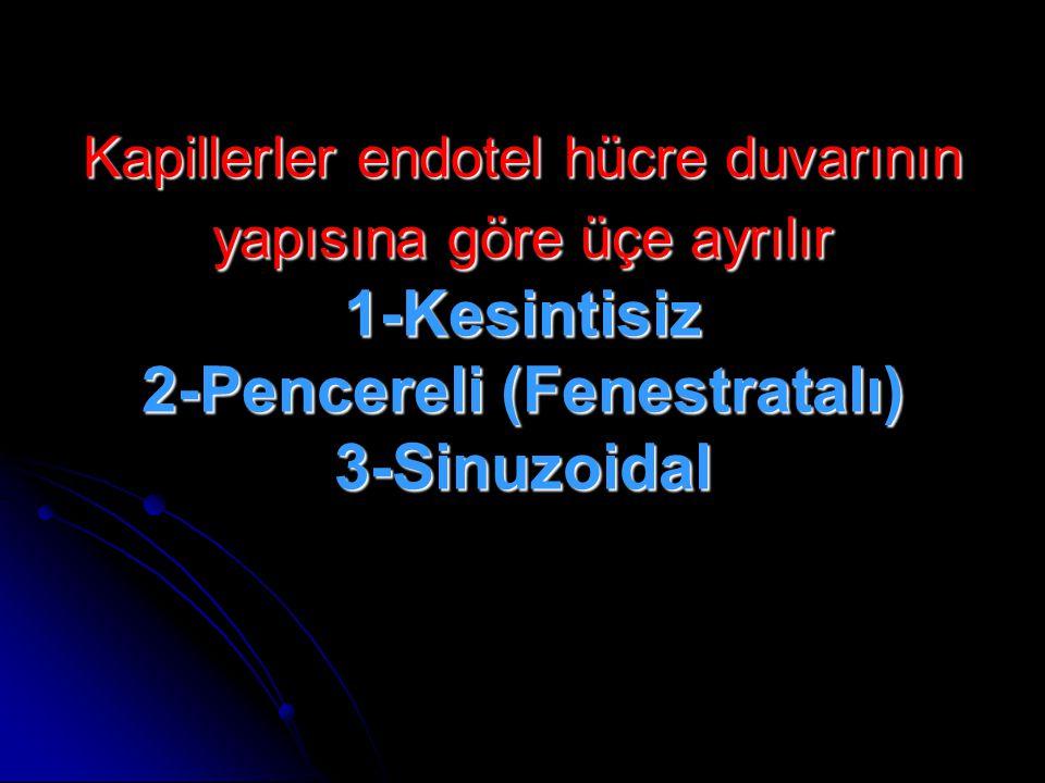 Kapillerler endotel hücre duvarının yapısına göre üçe ayrılır 1-Kesintisiz 2-Pencereli (Fenestratalı) 3-Sinuzoidal