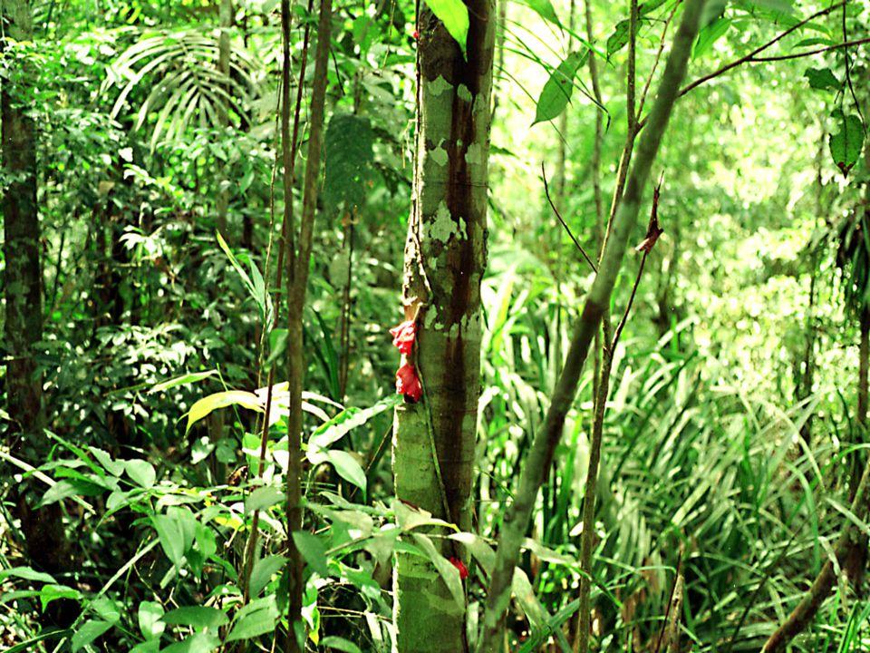 Kapillerler Kapillerler: Arterlerin getirdiği temiz kanın boşaldığı kılcal damar ağıdır.