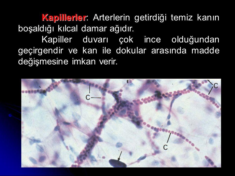 Venler: Venler: Kapiller damarlardan geçen kanı toplayan ve kalbe geri getiren damarlardır.