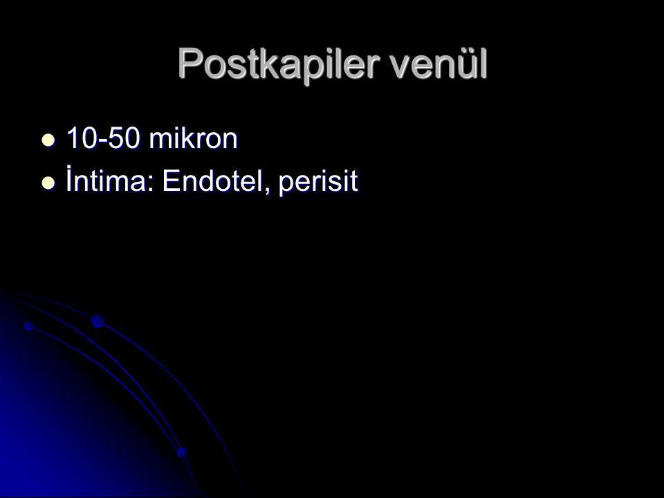 Musküler venül  50-100 mikron  İntima: Endotel,perisit  Mediya: 1-2 düz kas  Adventisya: Gevşek bd