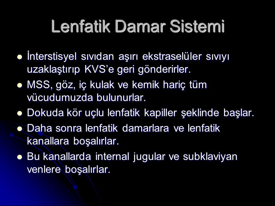 Lenfatik Damar Sistemi  İnterstisyel sıvıdan aşırı ekstraselüler sıvıyı uzaklaştırıp KVS'e geri gönderirler.