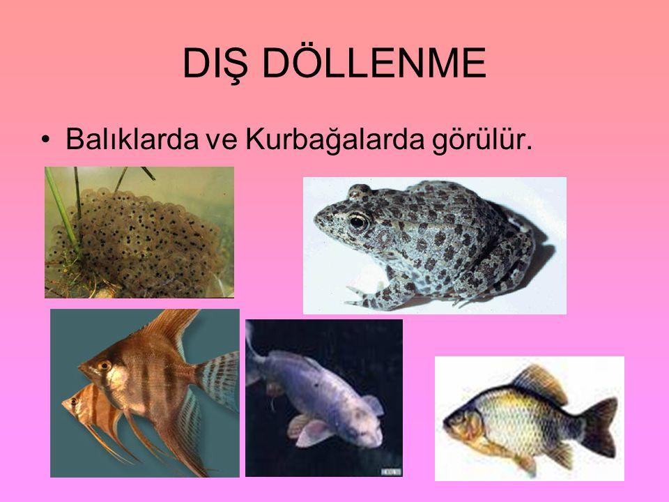 DIŞ DÖLLENME •Balıklarda ve Kurbağalarda görülür.