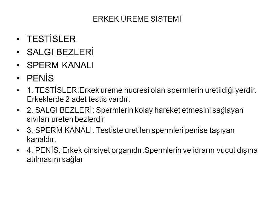 •TESTİSLER •SALGI BEZLERİ •SPERM KANALI •PENİS •1. TESTİSLER:Erkek üreme hücresi olan spermlerin üretildiği yerdir. Erkeklerde 2 adet testis vardır. •