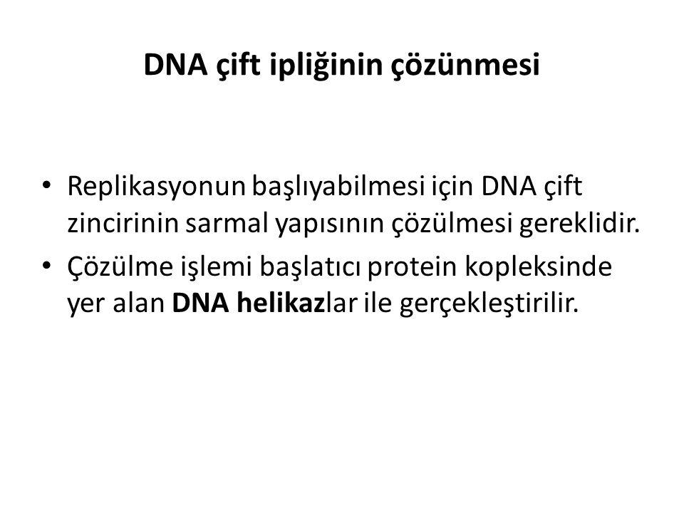 DNA çift ipliğinin çözünmesi • Replikasyonun başlıyabilmesi için DNA çift zincirinin sarmal yapısının çözülmesi gereklidir. • Çözülme işlemi başlatıcı