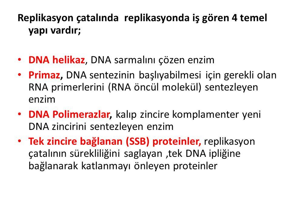 Replikasyon çatalında replikasyonda iş gören 4 temel yapı vardır; • DNA helikaz, DNA sarmalını çözen enzim • Primaz, DNA sentezinin başlıyabilmesi içi