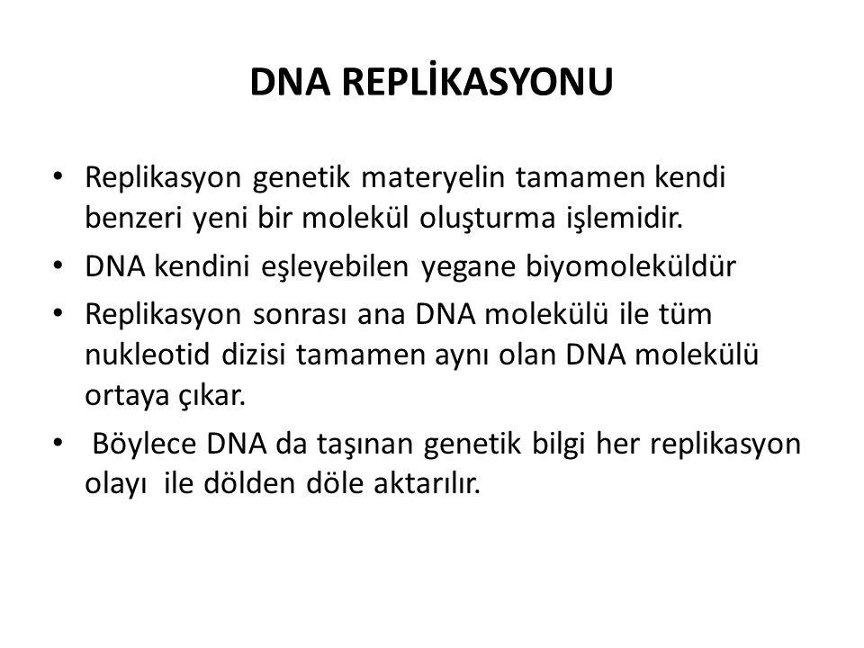 DNA REPLİKASYONU • Replikasyon genetik materyelin tamamen kendi benzeri yeni bir molekül oluşturma işlemidir. • DNA kendini eşleyebilen yegane biyomol