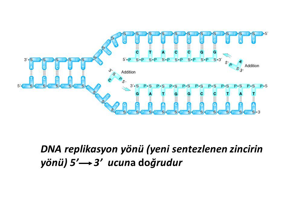 DNA replikasyon yönü (yeni sentezlenen zincirin yönü) 5' 3' ucuna doğrudur