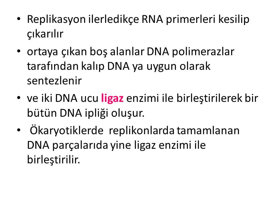 • Replikasyon ilerledikçe RNA primerleri kesilip çıkarılır • ortaya çıkan boş alanlar DNA polimerazlar tarafından kalıp DNA ya uygun olarak sentezleni