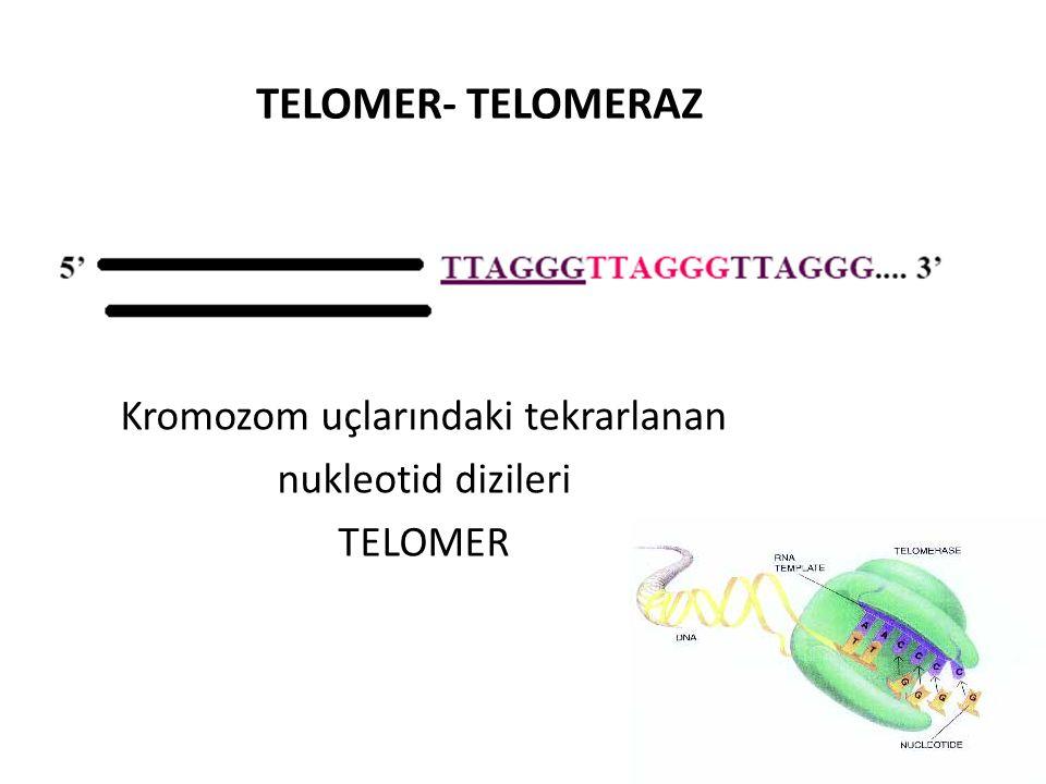 TELOMER- TELOMERAZ Kromozom uçlarındaki tekrarlanan nukleotid dizileri TELOMER
