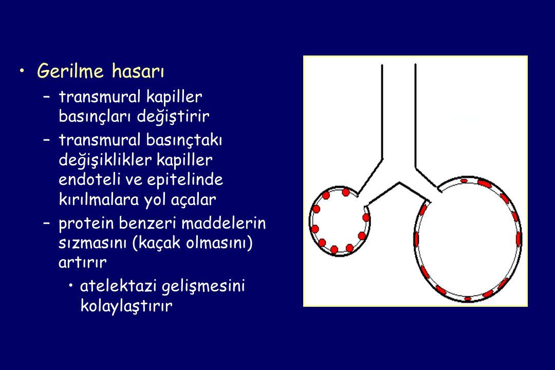 •Gerilme hasarı –transmural kapiller basınçları değiştirir –transmural basınçtakı değişiklikler kapiller endoteli ve epitelinde kırılmalara yol açalar –protein benzeri maddelerin sızmasını (kaçak olmasını) artırır •atelektazi gelişmesini kolaylaştırır