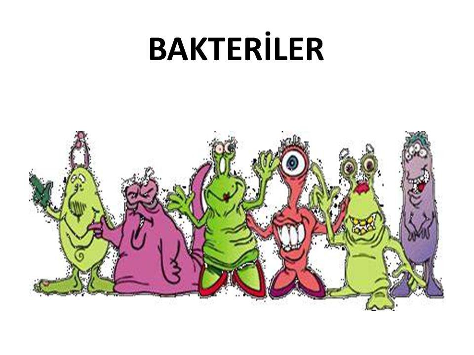 Bakteriler • Çıplak gözle görülemeyen, mini canlılar • Süt, yumurta, et gibi proteinli besinleri severler