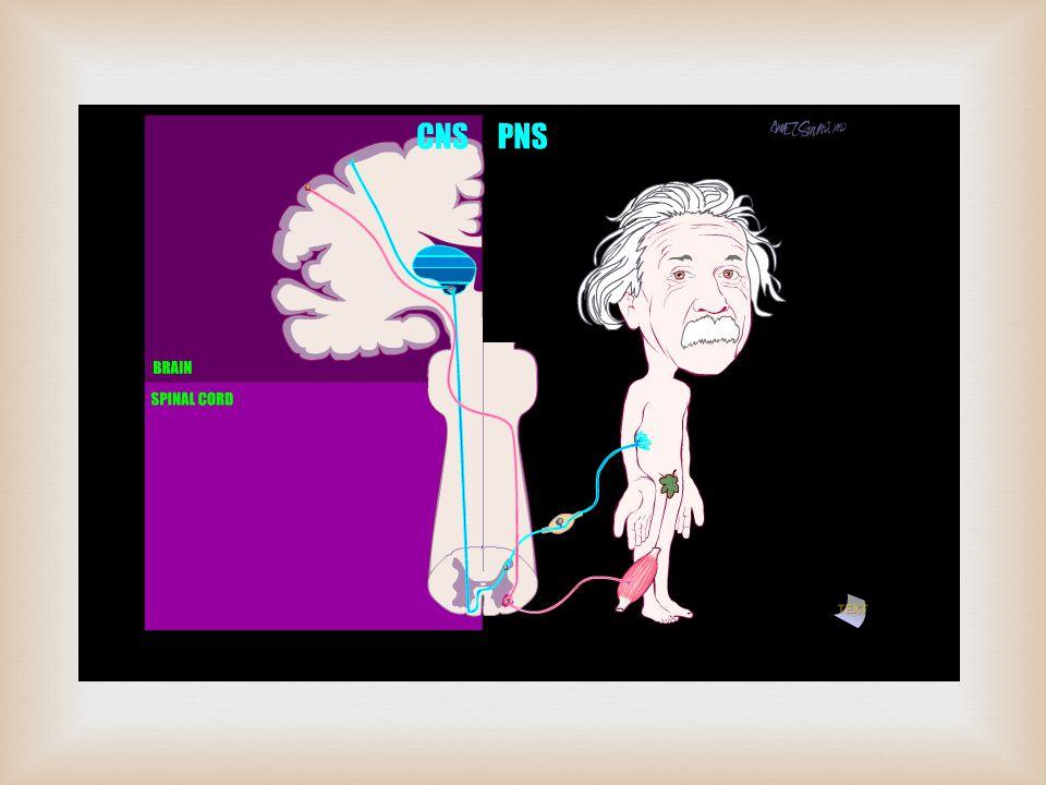   Periferik sinirleri etkileyen, anormal immunolojik yanıt sonucu oluştuğu düşünülen monofazik demyelinizan nöropatidir.