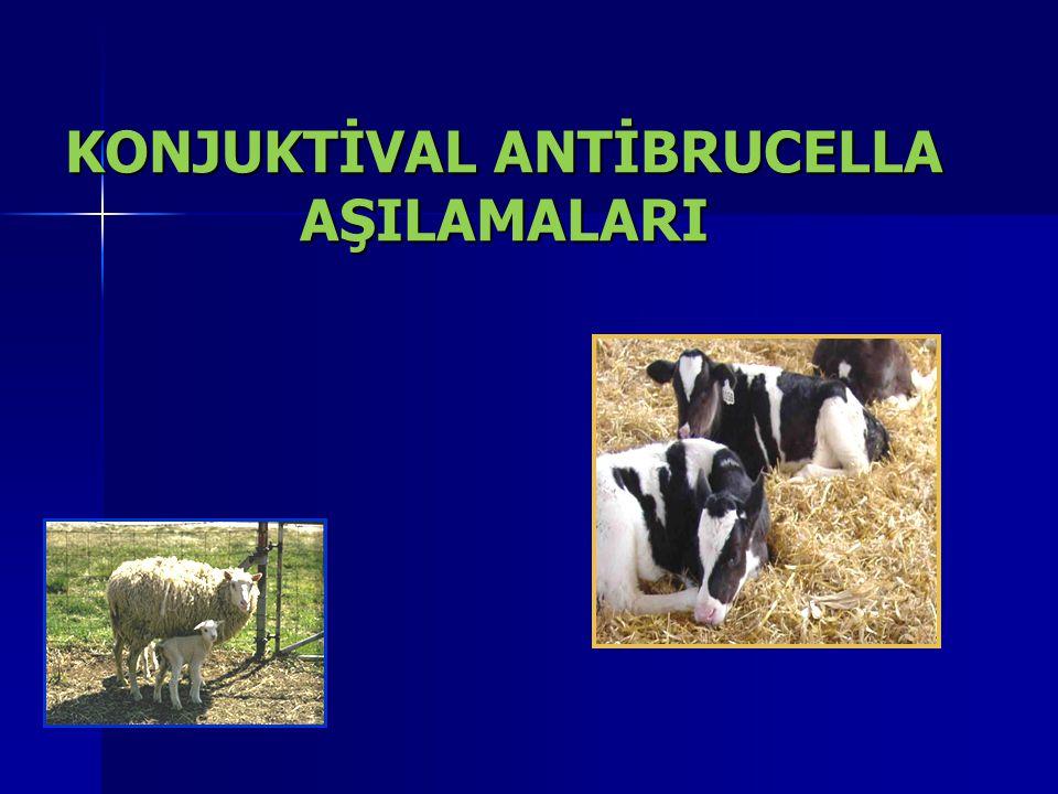 BRUCELLOZİS  Ülkemizde yaygın olarak görülen ve yetiştiricilerimizin ekonomik kayıplarına neden olmasının yanında sürdürülebilir hayvancılığımıza da olumsuz etkiler yapan Brusella, hem hayvan sağlığını hem de halk sağlığını tehdit eden önemli bir zoonoz hastalıktır.