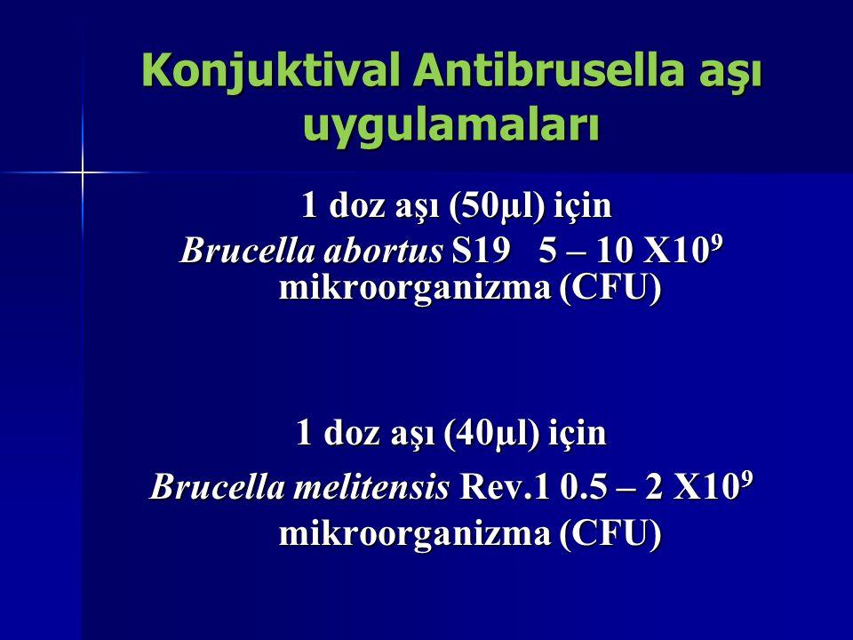 Konjuktival Antibrusella aşı uygulamaları 1 doz aşı (50µl) için 1 doz aşı (50µl) için Brucella abortus S19 5 – 10 X10 9 mikroorganizma (CFU) 1 doz aşı