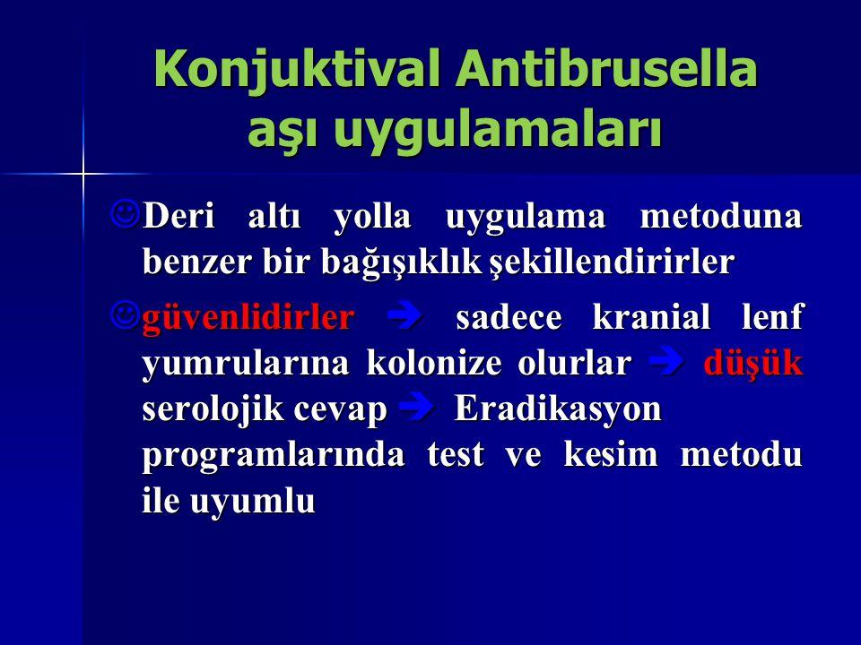 Konjuktival Antibrusella aşı uygulamaları  Deri altı yolla uygulama metoduna benzer bir bağışıklık şekillendirirler  güvenlidirler  sadece kranial