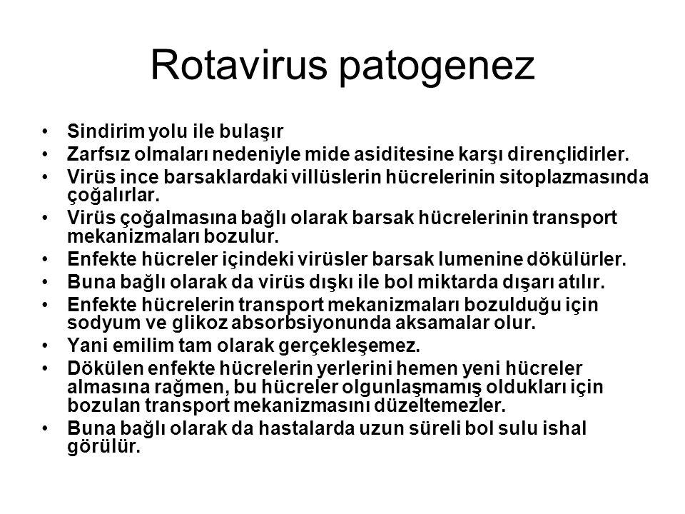 Rotavirus patogenez •Sindirim yolu ile bulaşır •Zarfsız olmaları nedeniyle mide asiditesine karşı dirençlidirler. •Virüs ince barsaklardaki villüsleri