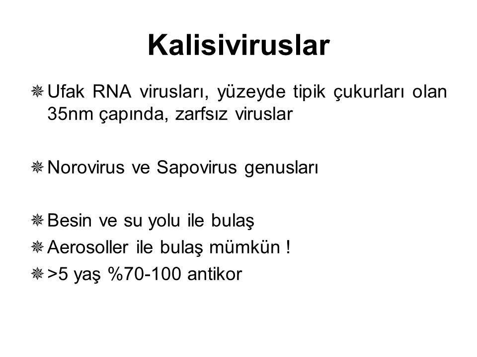  Ufak RNA virusları, yüzeyde tipik çukurları olan 35nm çapında, zarfsız viruslar  Norovirus ve Sapovirus genusları  Besin ve su yolu ile bulaş  Ae