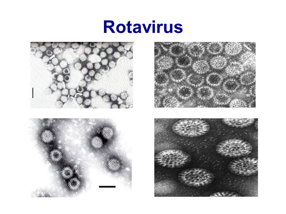 Astrovirus  Yıldız görünümünde, 28 nm  Küçük çocuklar ve yeni doğanlarda gastroenterit  Klinik RV ve adenovirusa benzer  Üç yaş civarındaki çocukların çoğunda antikor  E.M ile tanı zor  Son yıllarda ELISA testleri