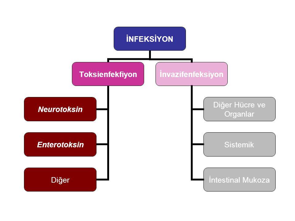 Toksienfekfiyon Neurotoksin Enterotoksin Diğer İnvazifenfeksiyon Diğer Hücre ve Organlar Sistemik İntestinal Mukoza