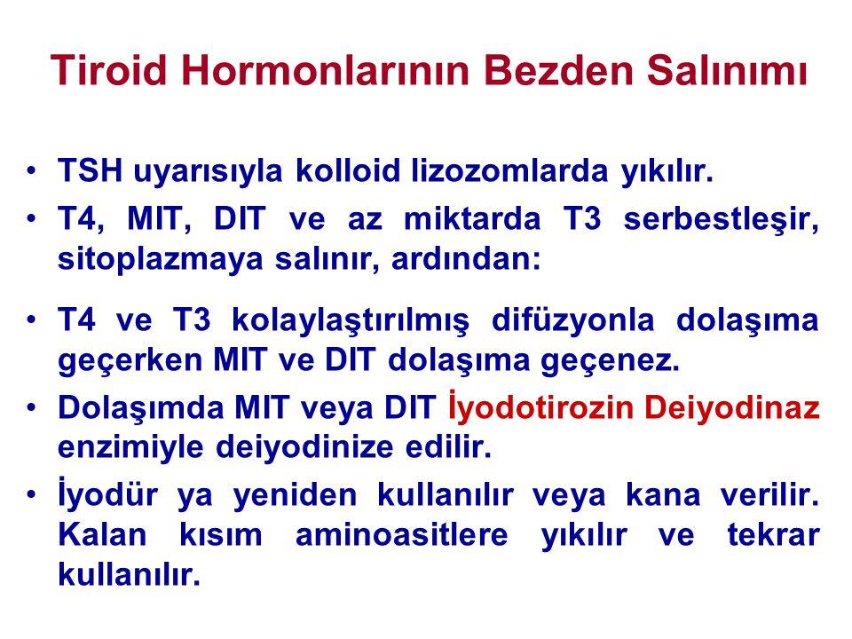 Tiroid Hormonlarının Bezden Salınımı •TSH uyarısıyla kolloid lizozomlarda yıkılır. •T4, MIT, DIT ve az miktarda T3 serbestleşir, sitoplazmaya salınır,