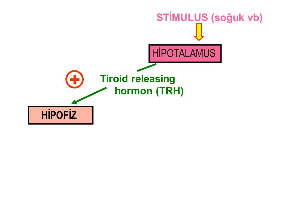HİPOTALAMUS HİPOFİZ Tiroid releasing hormon (TRH) + ST İ MULUS (soğuk vb)