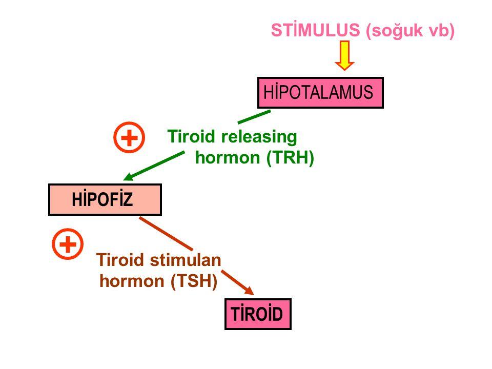 TİROİD Tiroid stimulan hormon (TSH) + HİPOTALAMUS HİPOFİZ Tiroid releasing hormon (TRH) + ST İ MULUS (soğuk vb)