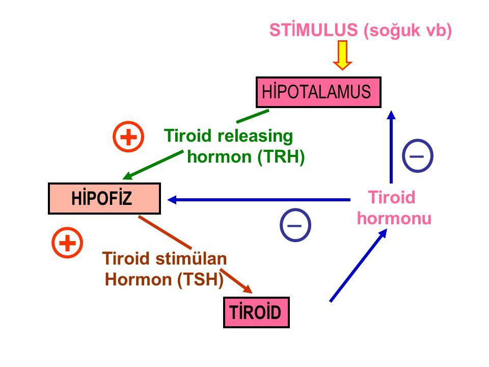 Tiroid hormonu _ _ TİROİD Tiroid stimülan Hormon (TSH) + HİPOTALAMUS HİPOFİZ Tiroid releasing hormon (TRH) + ST İ MULUS (soğuk vb)
