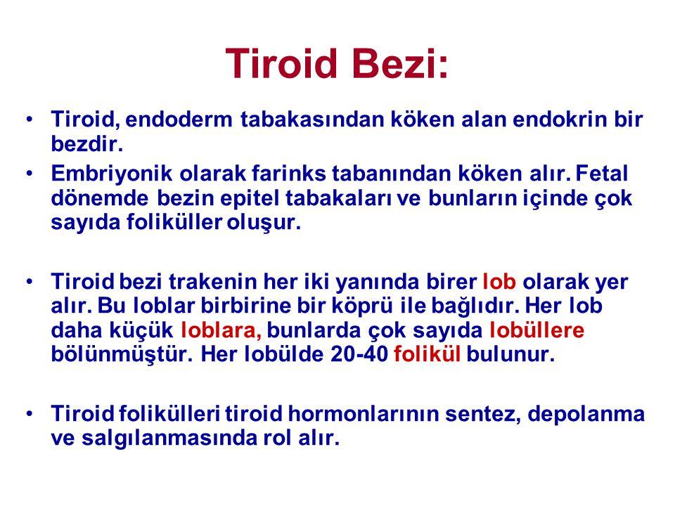 Tiroid Bezi: •Tiroid, endoderm tabakasından köken alan endokrin bir bezdir. •Embriyonik olarak farinks tabanından köken alır. Fetal dönemde bezin epit