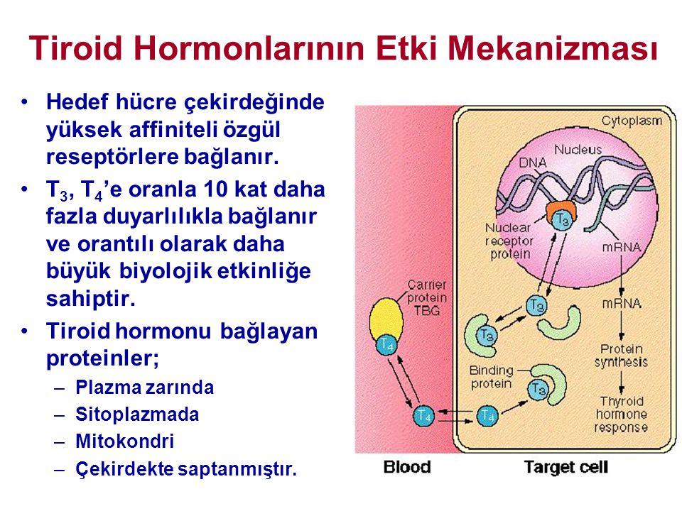 Tiroid Hormonlarının Etki Mekanizması •Hedef hücre çekirdeğinde yüksek affiniteli özgül reseptörlere bağlanır. •T 3, T 4 'e oranla 10 kat daha fazla d