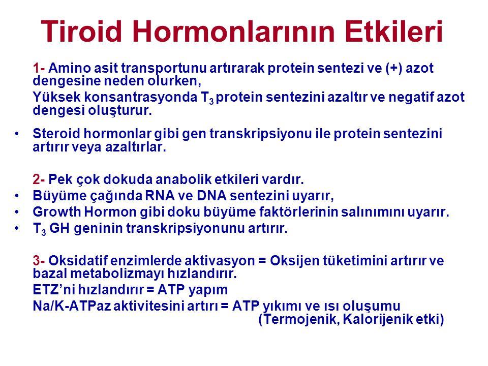 Tiroid Hormonlarının Etkileri 1- Amino asit transportunu artırarak protein sentezi ve (+) azot dengesine neden olurken, Yüksek konsantrasyonda T 3 pro