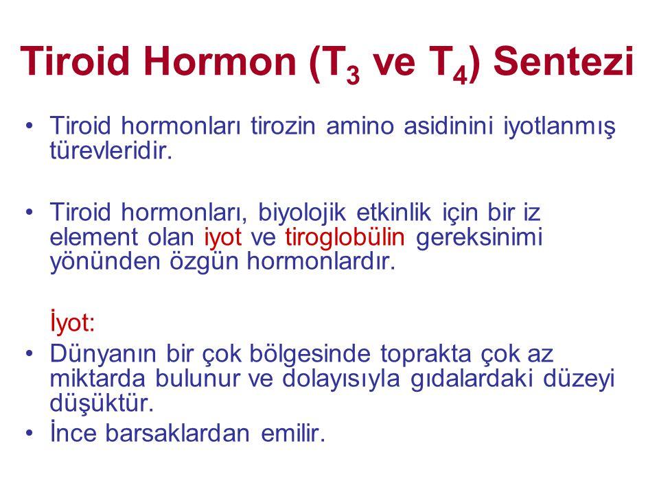 Tiroid Hormon (T 3 ve T 4 ) Sentezi •Tiroid hormonları tirozin amino asidinini iyotlanmış türevleridir. •Tiroid hormonları, biyolojik etkinlik için bi