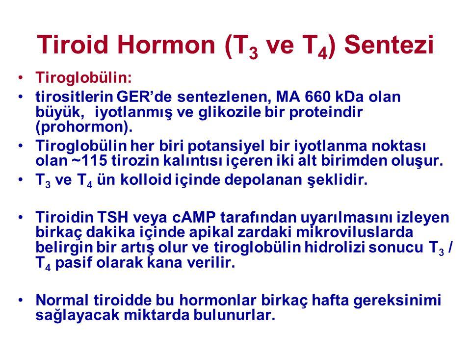 Tiroid Hormon (T 3 ve T 4 ) Sentezi •Tiroglobülin: •tirositlerin GER'de sentezlenen, MA 660 kDa olan büyük, iyotlanmış ve glikozile bir proteindir (pr