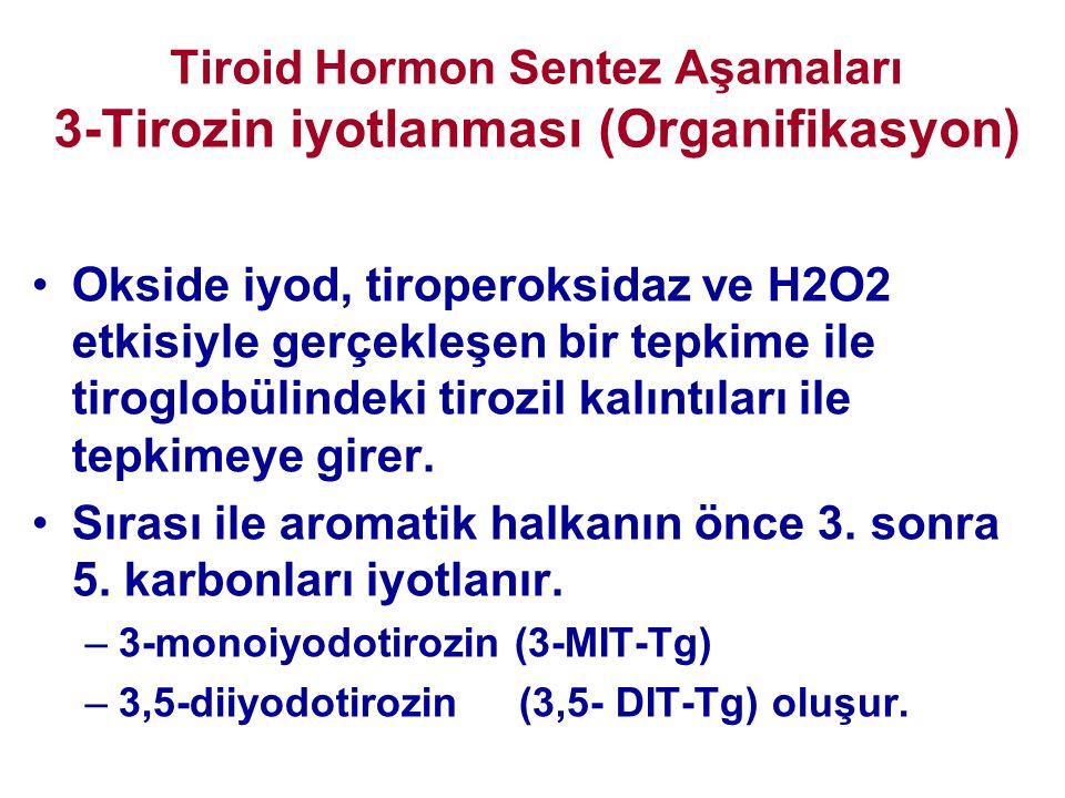 Tiroid Hormon Sentez Aşamaları 3-Tirozin iyotlanması (Organifikasyon) •Okside iyod, tiroperoksidaz ve H2O2 etkisiyle gerçekleşen bir tepkime ile tirog