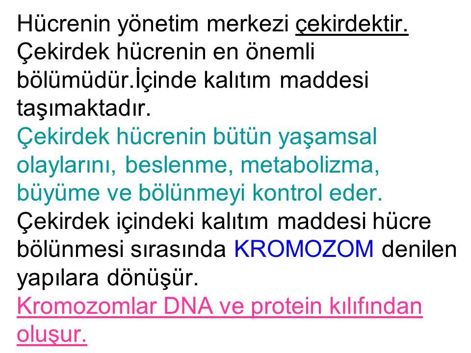 Kromozomların yapısında belli bir şifrelere sahip olan genetik madde bulunur.