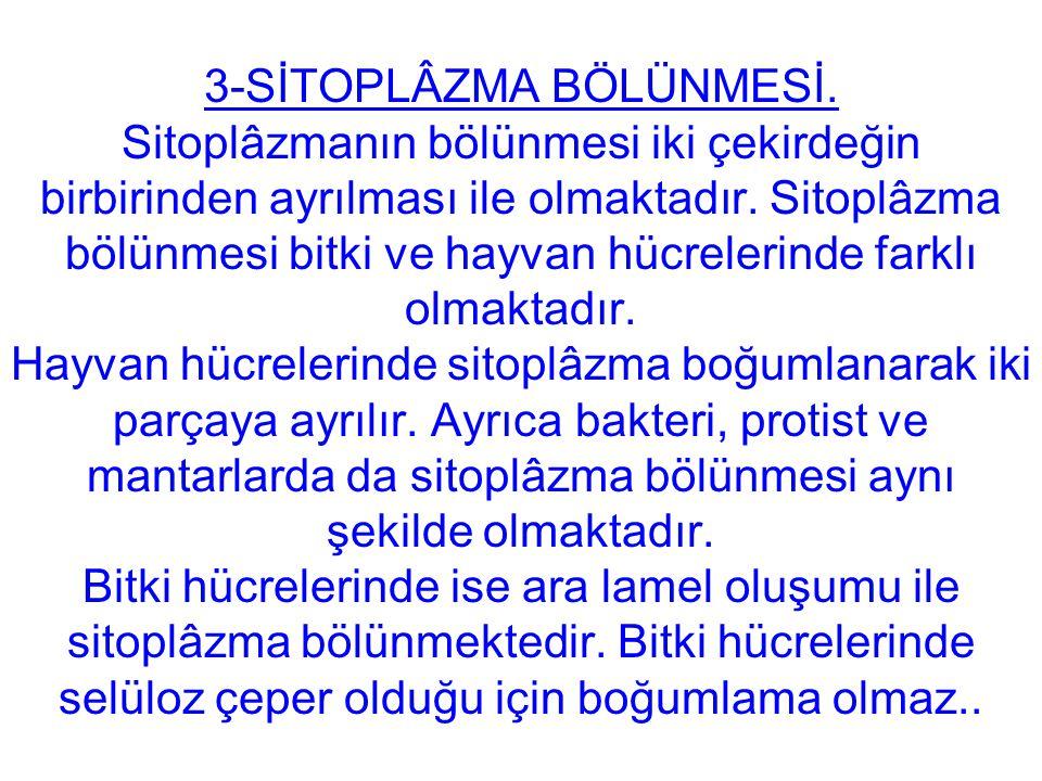 3-SİTOPLÂZMA BÖLÜNMESİ.