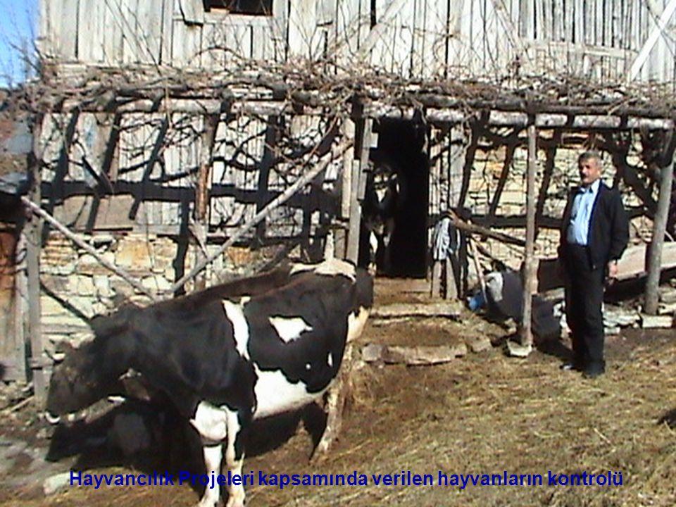 Hayvancılık Projeleri kapsamında verilen hayvanların kontrolü