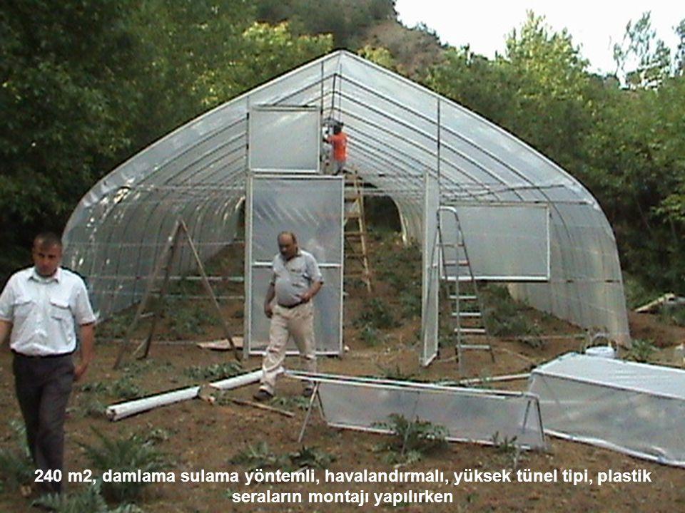 240 m2, damlama sulama yöntemli, havalandırmalı, yüksek tünel tipi, plastik seraların montajı yapılırken
