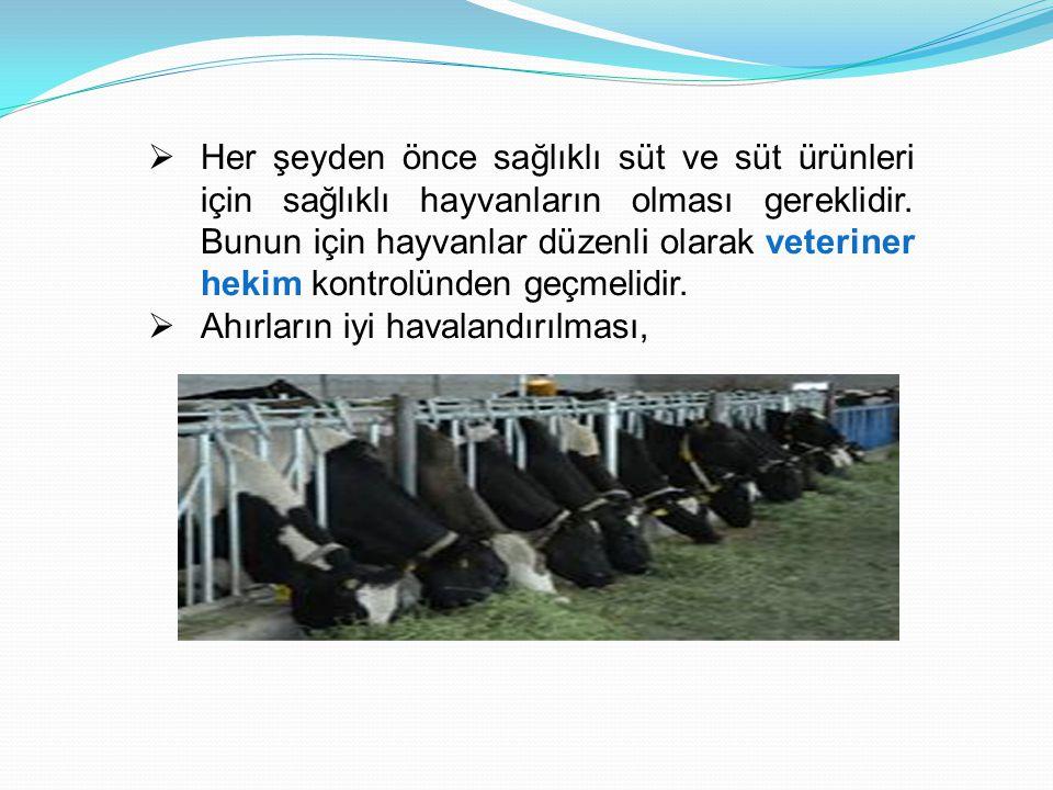  Her şeyden önce sağlıklı süt ve süt ürünleri için sağlıklı hayvanların olması gereklidir. Bunun için hayvanlar düzenli olarak veteriner hekim kontro