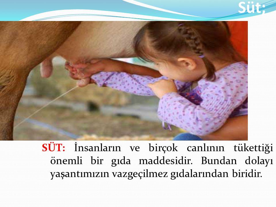Kaliteli bir süt ancak sağlıklı hayvanlardan ve hayvanın sağlıklı memelerinden temiz bir sağım sonucu elde edilir.