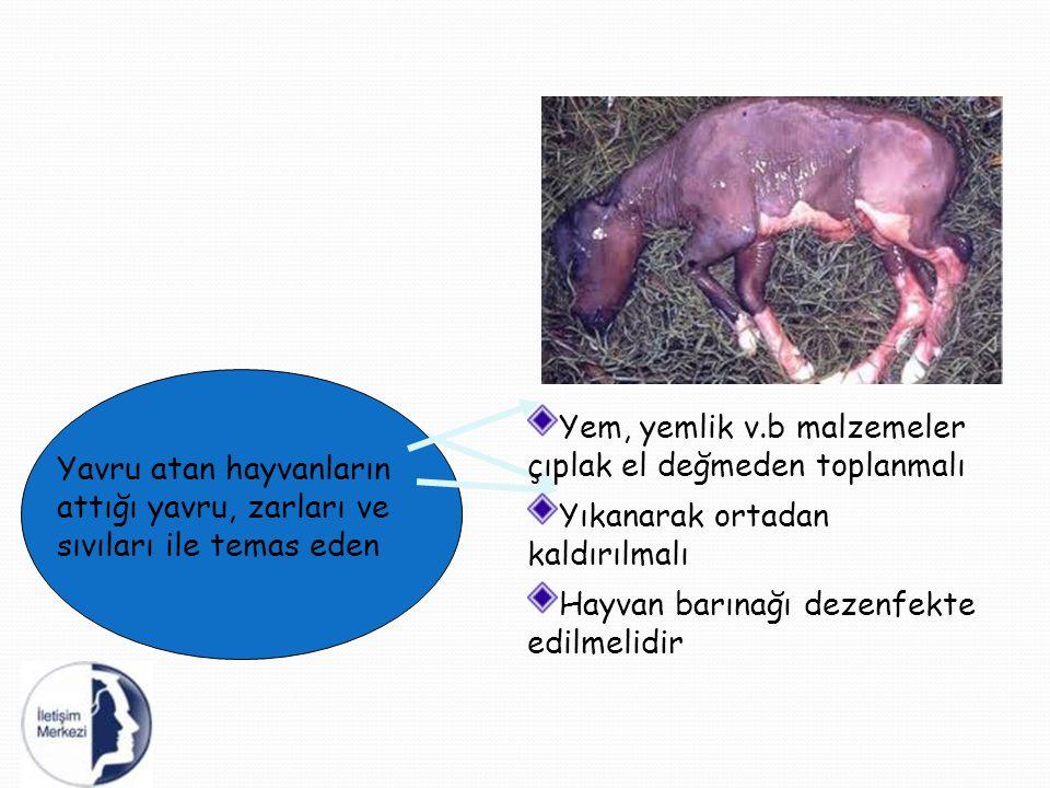 Yavru atan hayvanların attığı yavru, zarları ve sıvıları ile temas eden Yem, yemlik v.b malzemeler çıplak el değmeden toplanmalı Yıkanarak ortadan kal