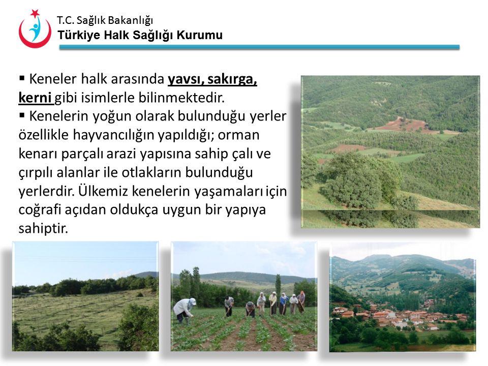 T.C. Sağlık Bakanlığı Türkiye Halk Sağlığı Kurumu T.C. Sağlık Bakanlığı Türkiye Halk Sağlığı Kurumu 3 KKKA Nasıl Bulaşır? Daha çok vücudumuza kene tut