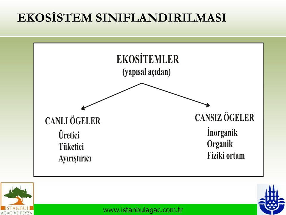 www.istanbulagac.com.tr EKOSİSTEM SINIFLANDIRILMASI