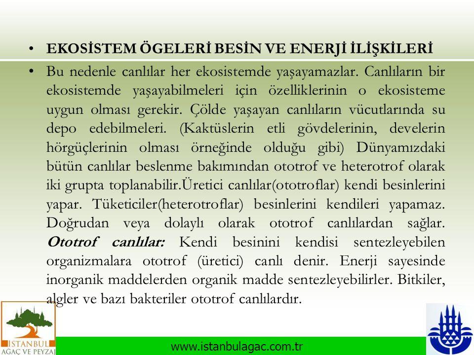 www.istanbulagac.com.tr •EKOSİSTEM ÖGELERİ BESİN VE ENERJİ İLİŞKİLERİ •Bu nedenle canlılar her ekosistemde yaşayamazlar. Canlıların bir ekosistemde ya